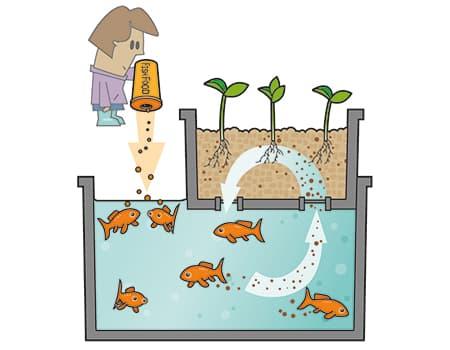 Acuapon a a ade unos peces a tu huerto idea tu mismo for Imagenes de hidroponia