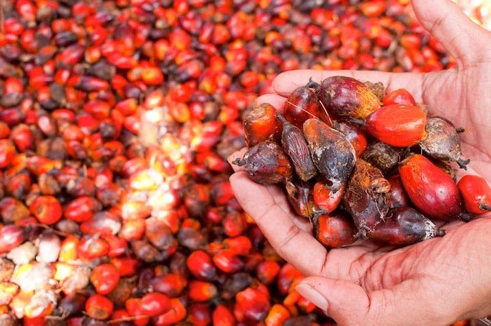 Datil-palma-aceite