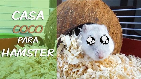 casa-coco-hamster